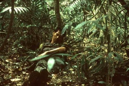 tropical-2.jpg