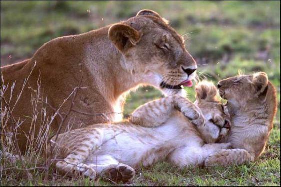 animaux-amoureux-3.jpg
